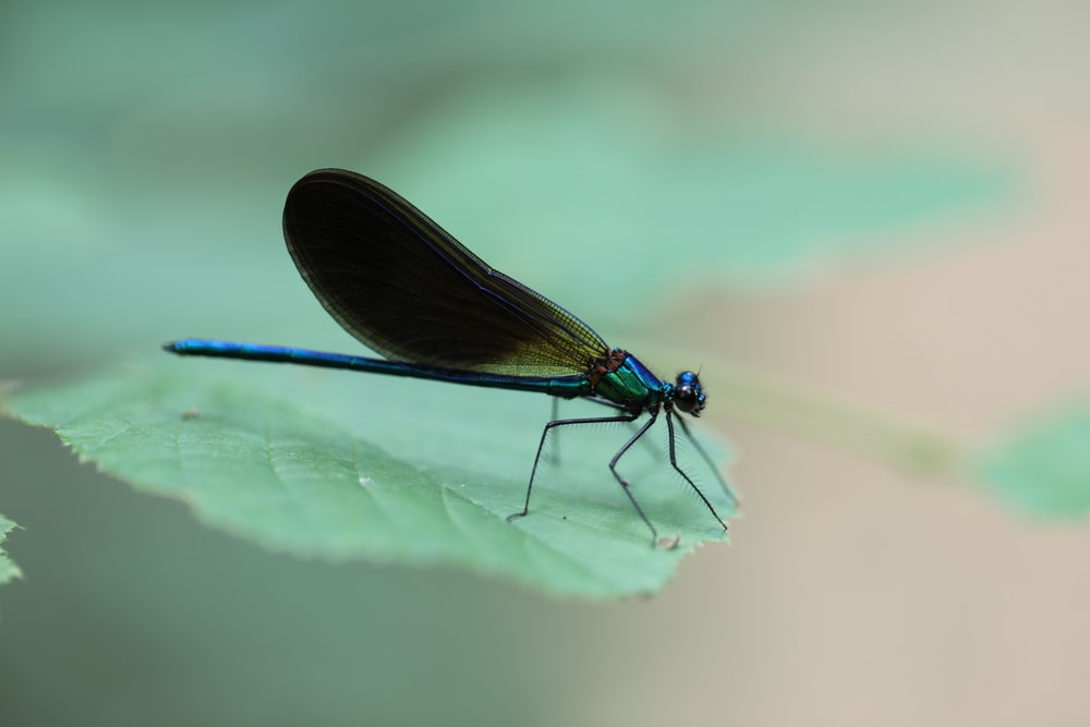 green damselfly perched on green leaf in close up photography during daytime