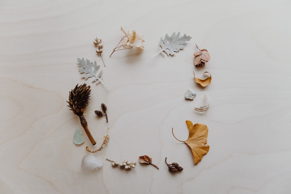 flat lay photogprapy of leaves