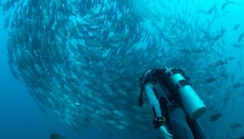 Scuba Diving communities