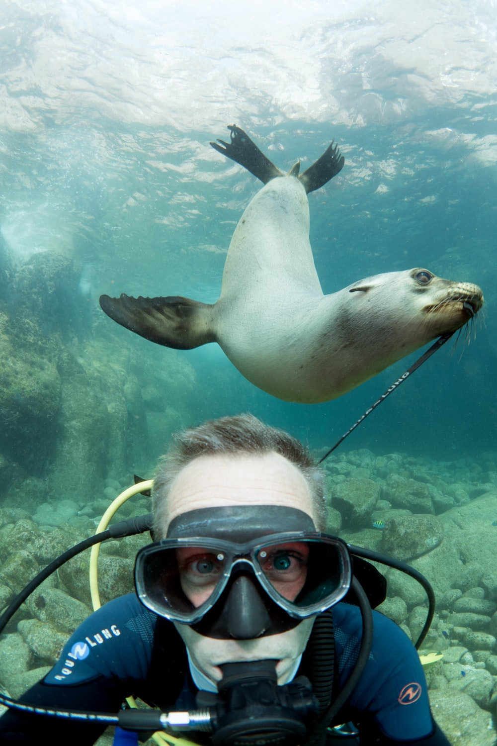 seal and man underwater