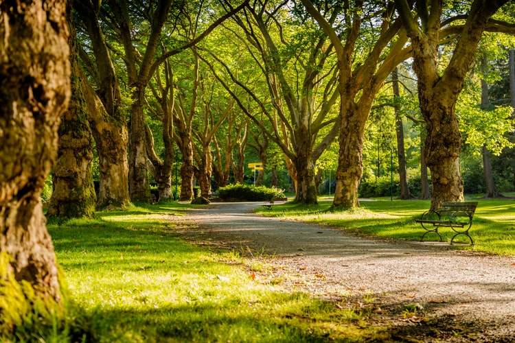 idp-stanley park