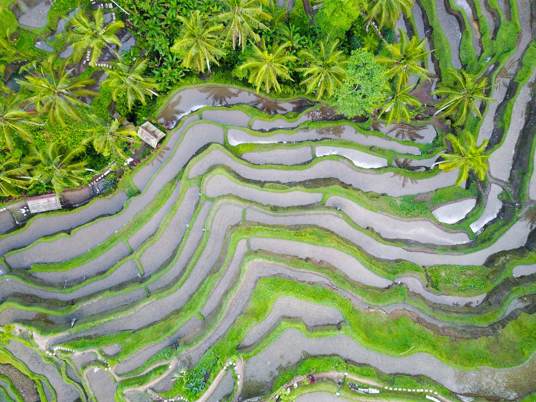 """We spent the night in Ubud - about a 15 minute scooter ride away from these rice terraces/paddies. We got up early to catch the sunrise here, and spent the next few hours running around trying to get all the shots. I love the patterns these farms create. It's crazy to build a farm on the side of a mountain, but I'm glad they did. Tip: if you go early you don't have to pay the """"entry fee""""."""