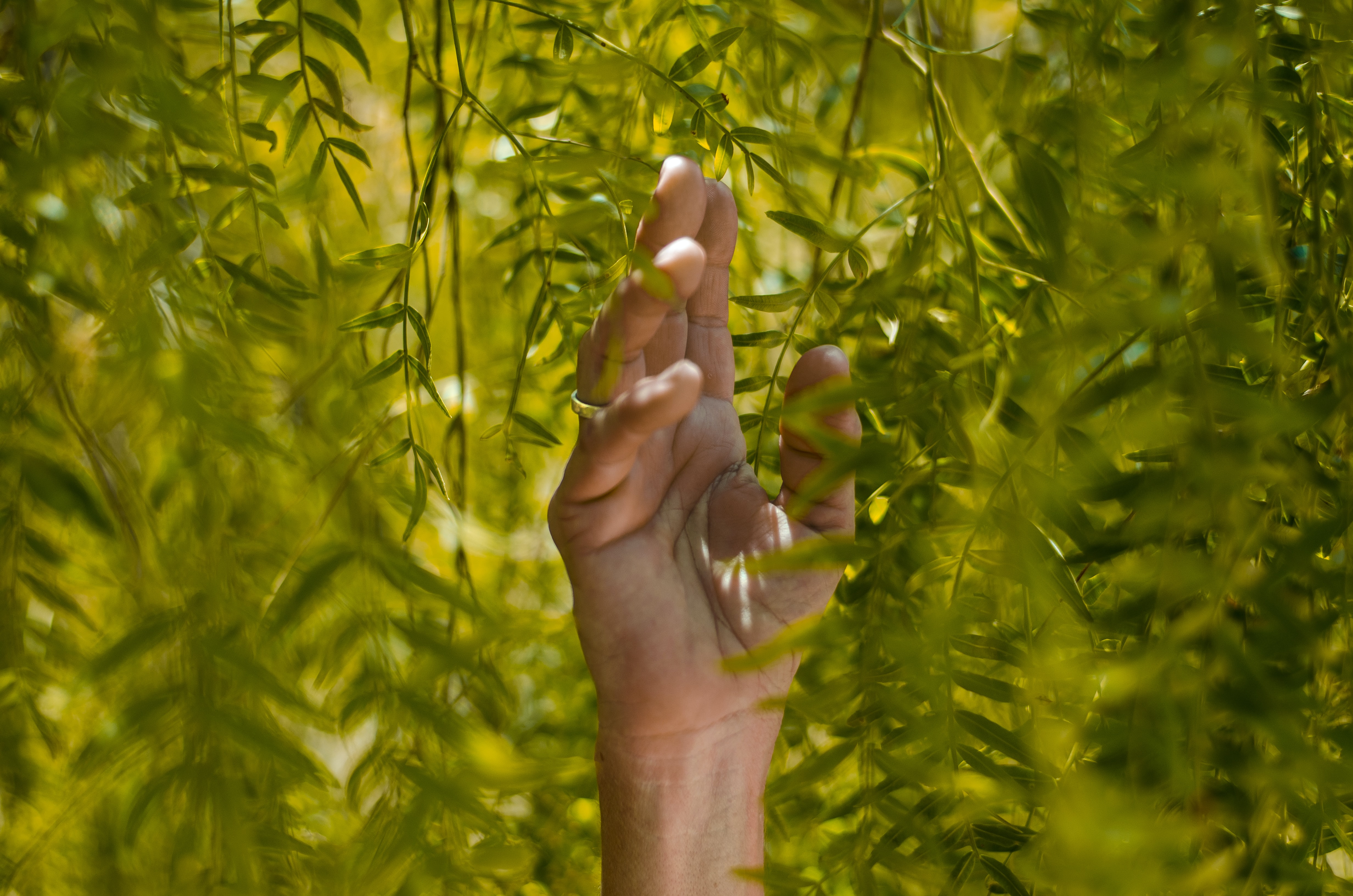 person holding green leaf plants