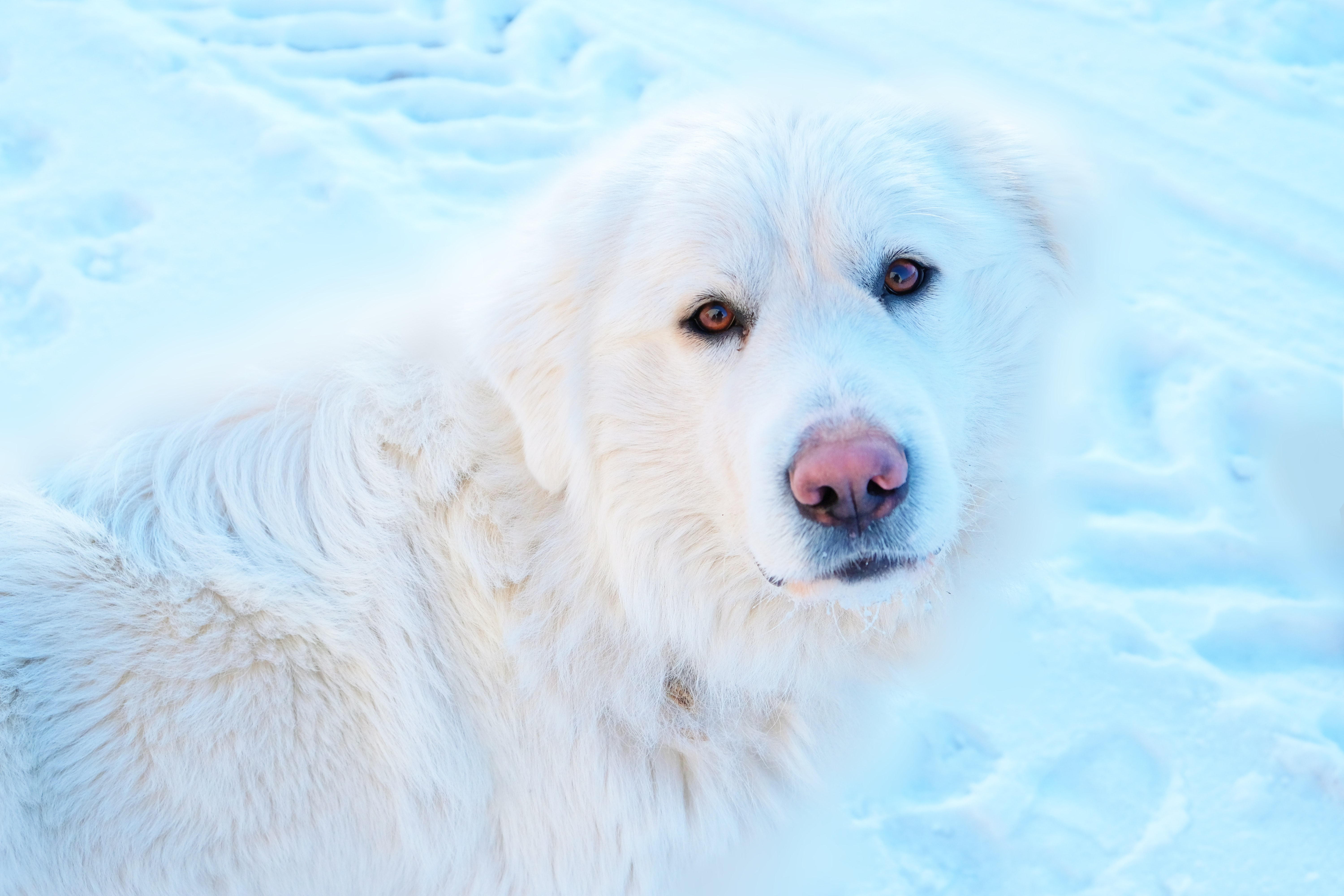 white dog on white snow field