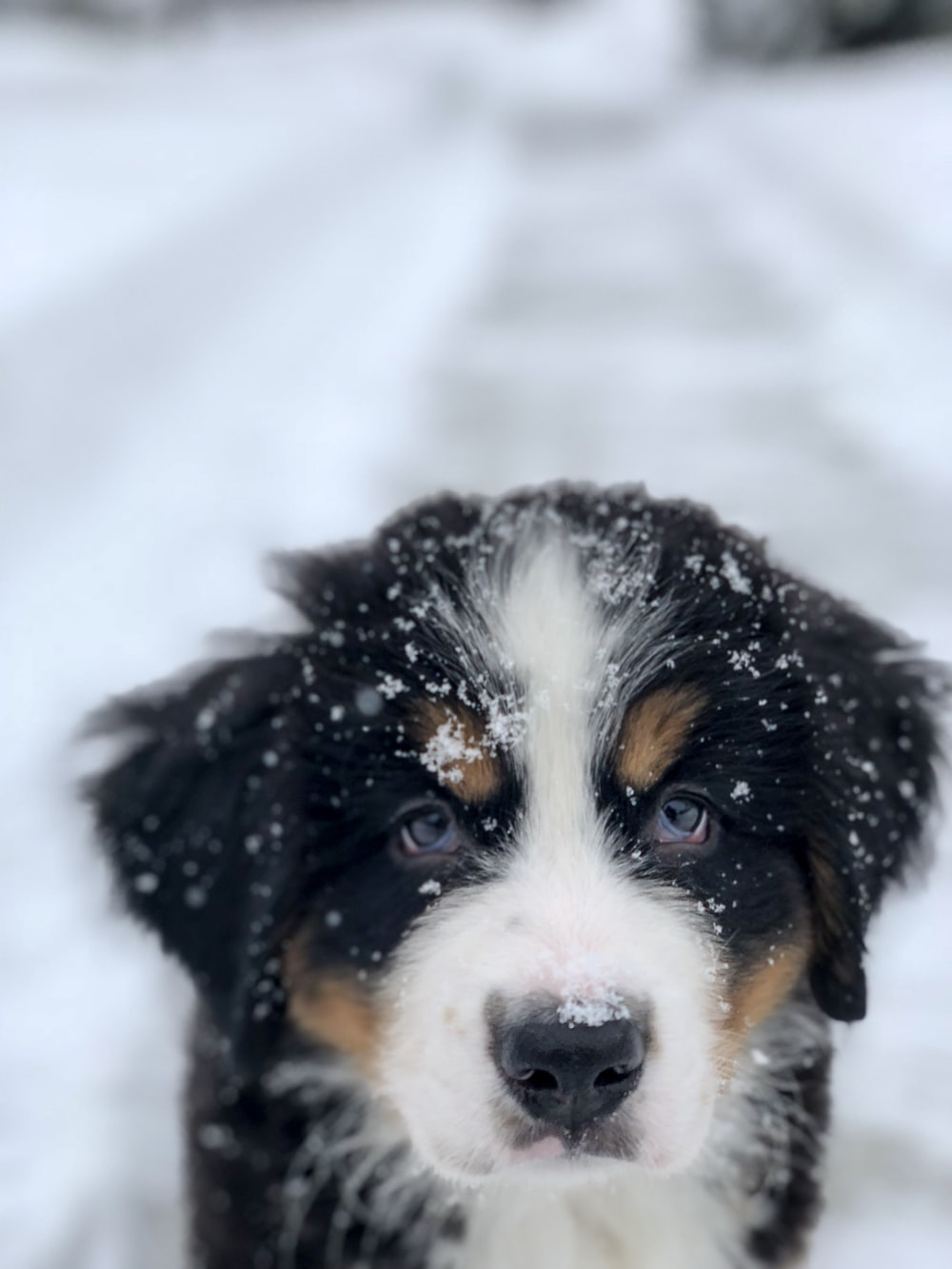 selective focus photography of short-coated black and white puppy