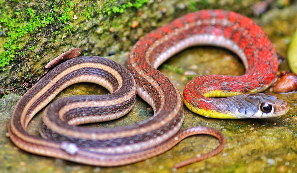selective focus photography of red snake