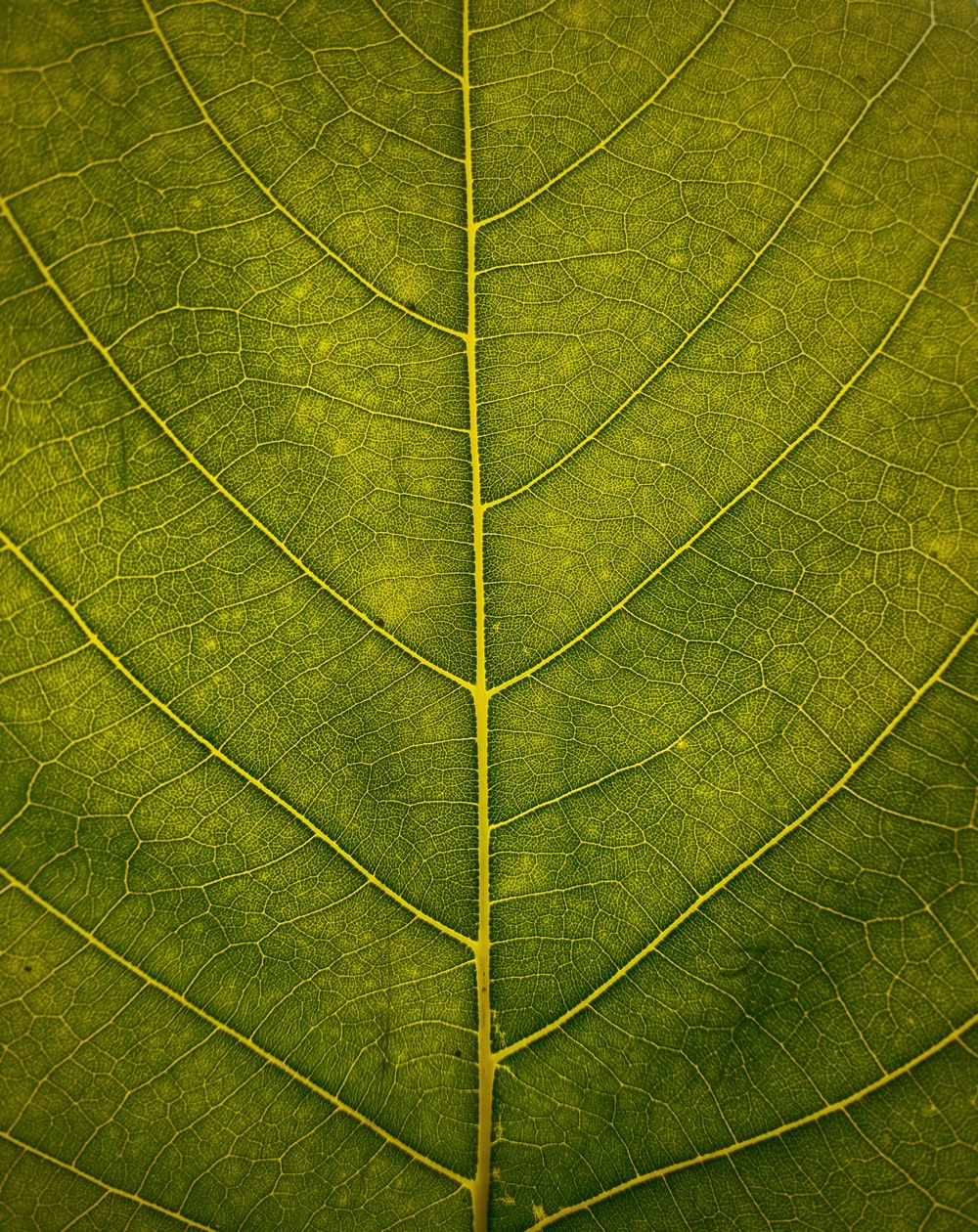 macro shot of green leaf