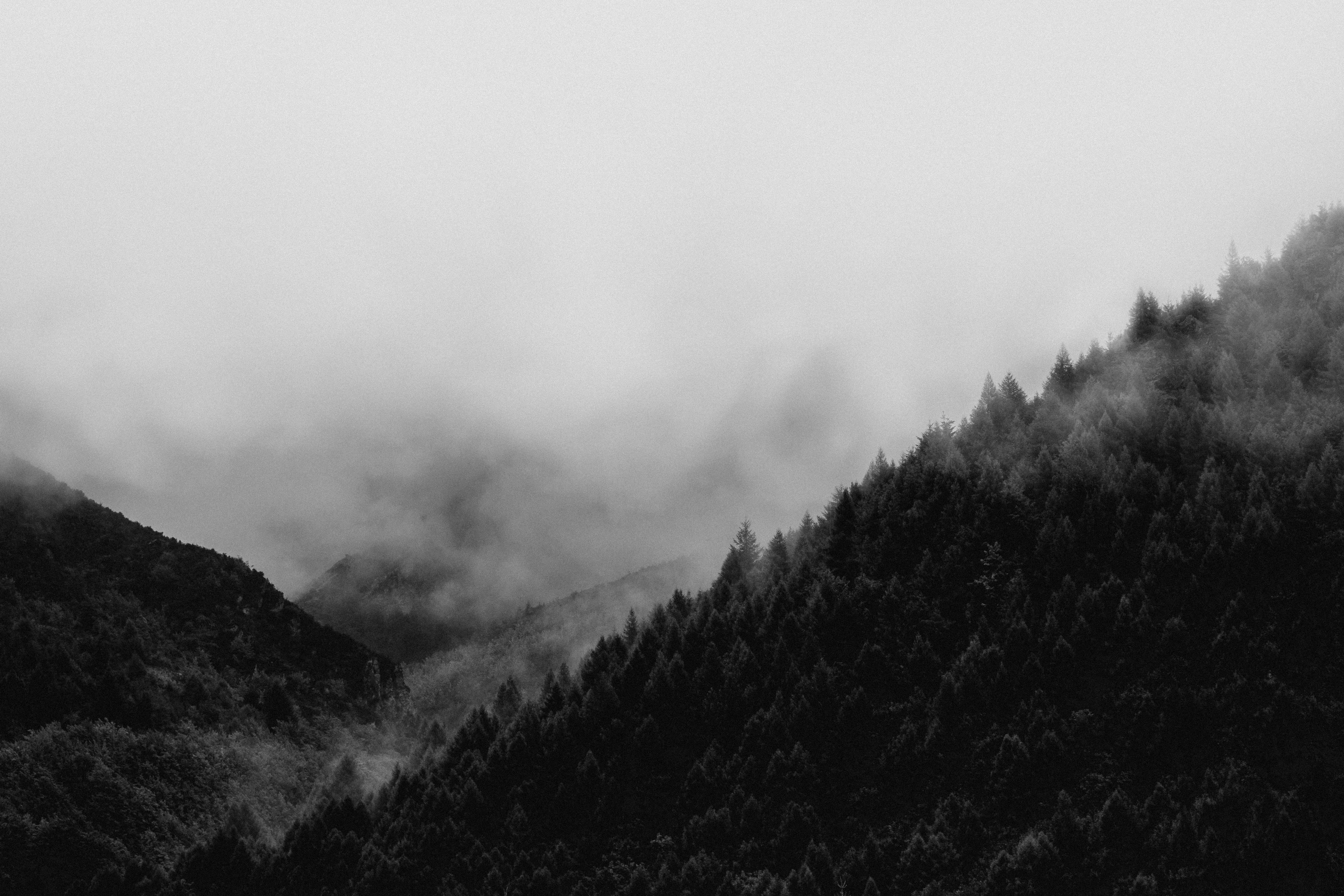 grayscale landscape photography of a foggy forest