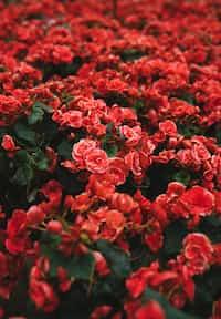 In a World of Flowers... feelings stories