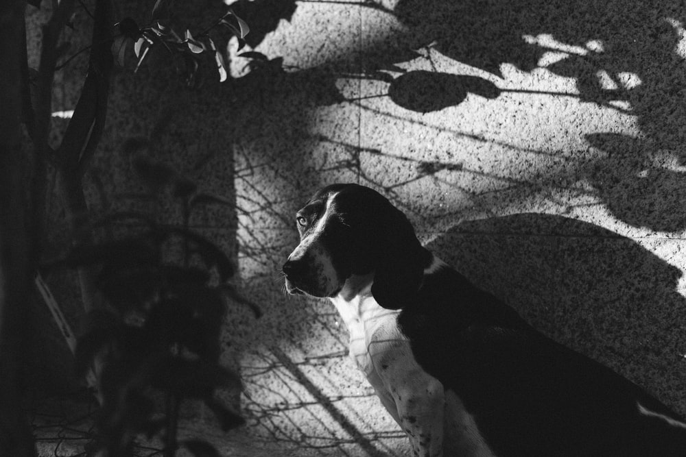 grayscale photo of dog beside concrete wall
