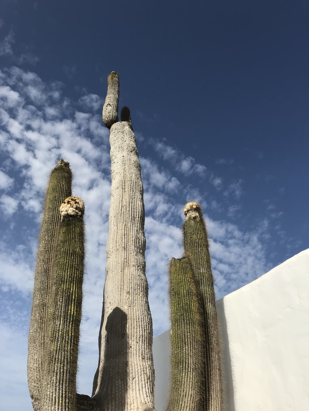 cactus plant