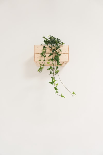 green English ivy vine with white background
