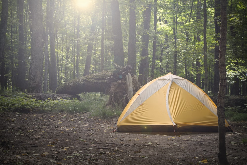 yellow and gray tent surrounded by trees