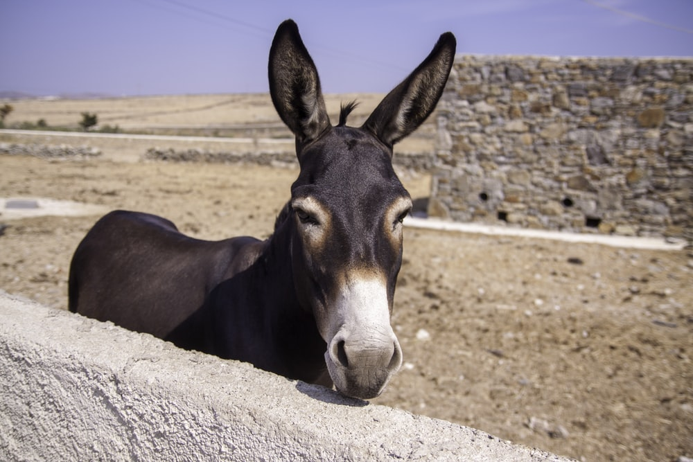 donkey standing beside concrete wall