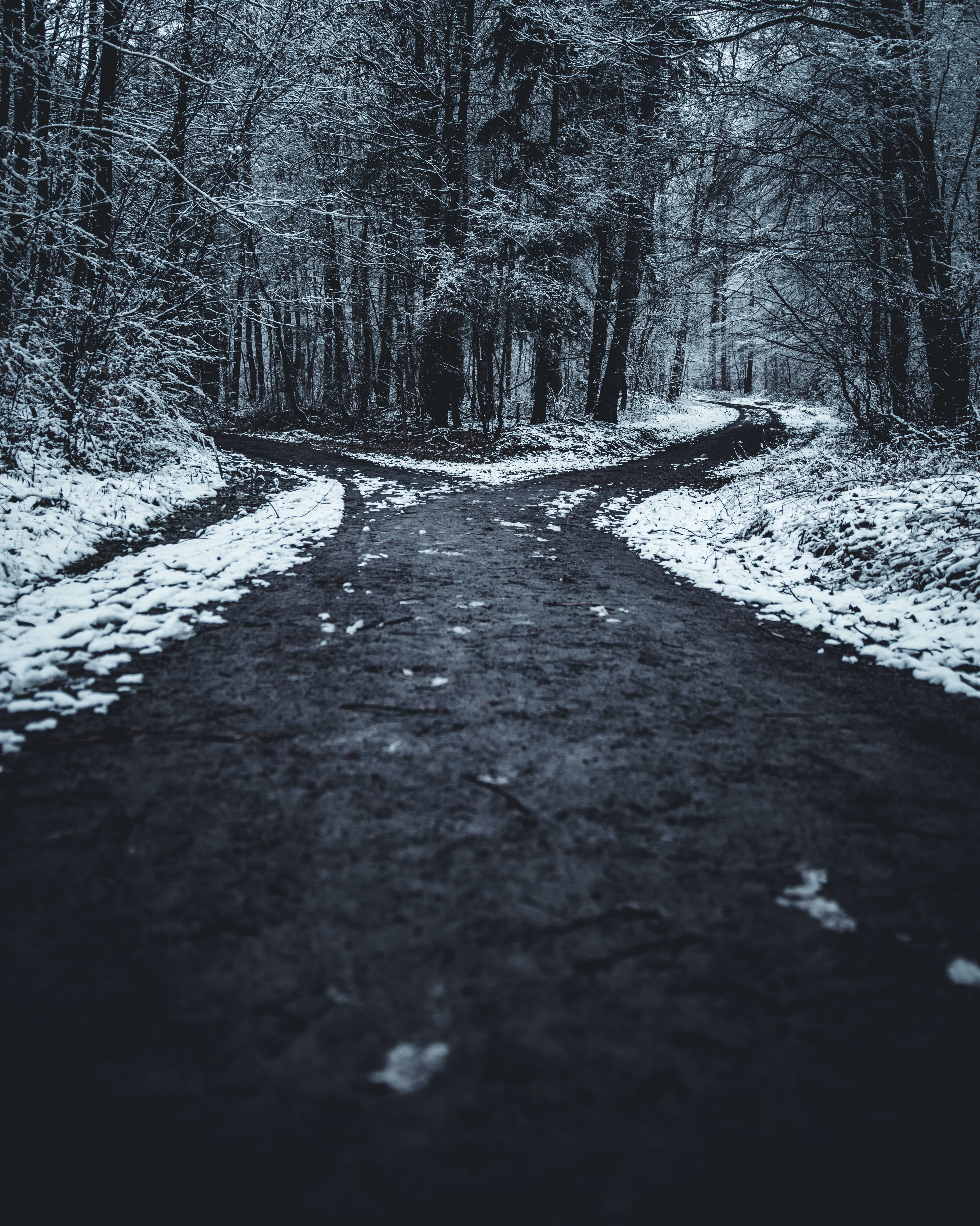 landscape photography of splitted road surrounded with trees
