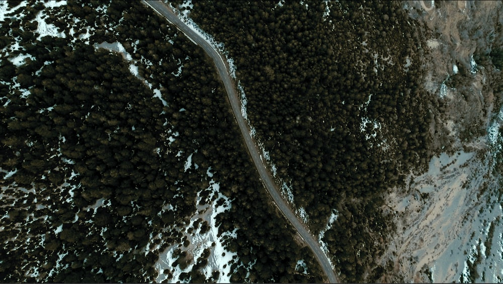 aerial photography of road between forests