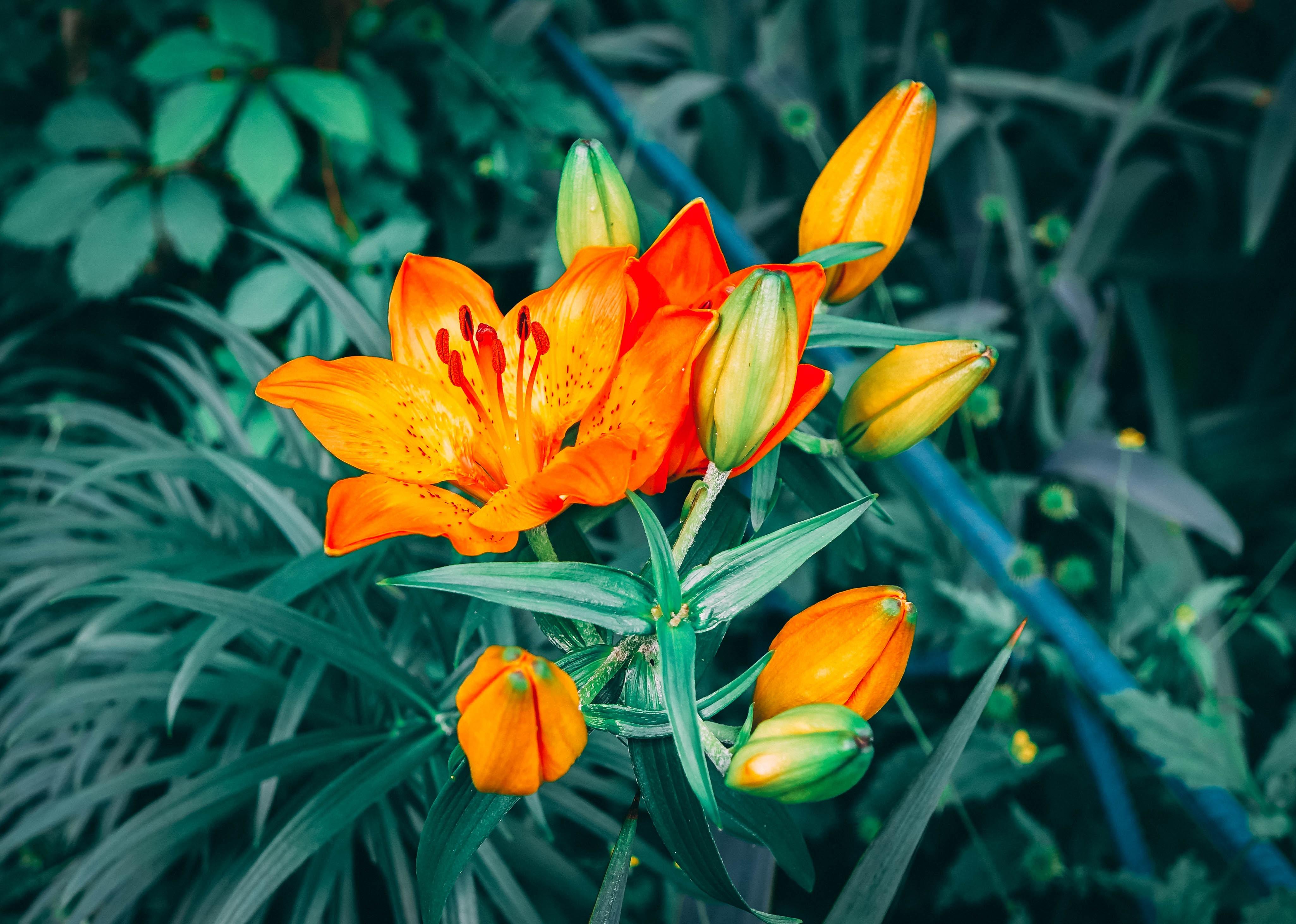 shallow focus photography of orange petal flower