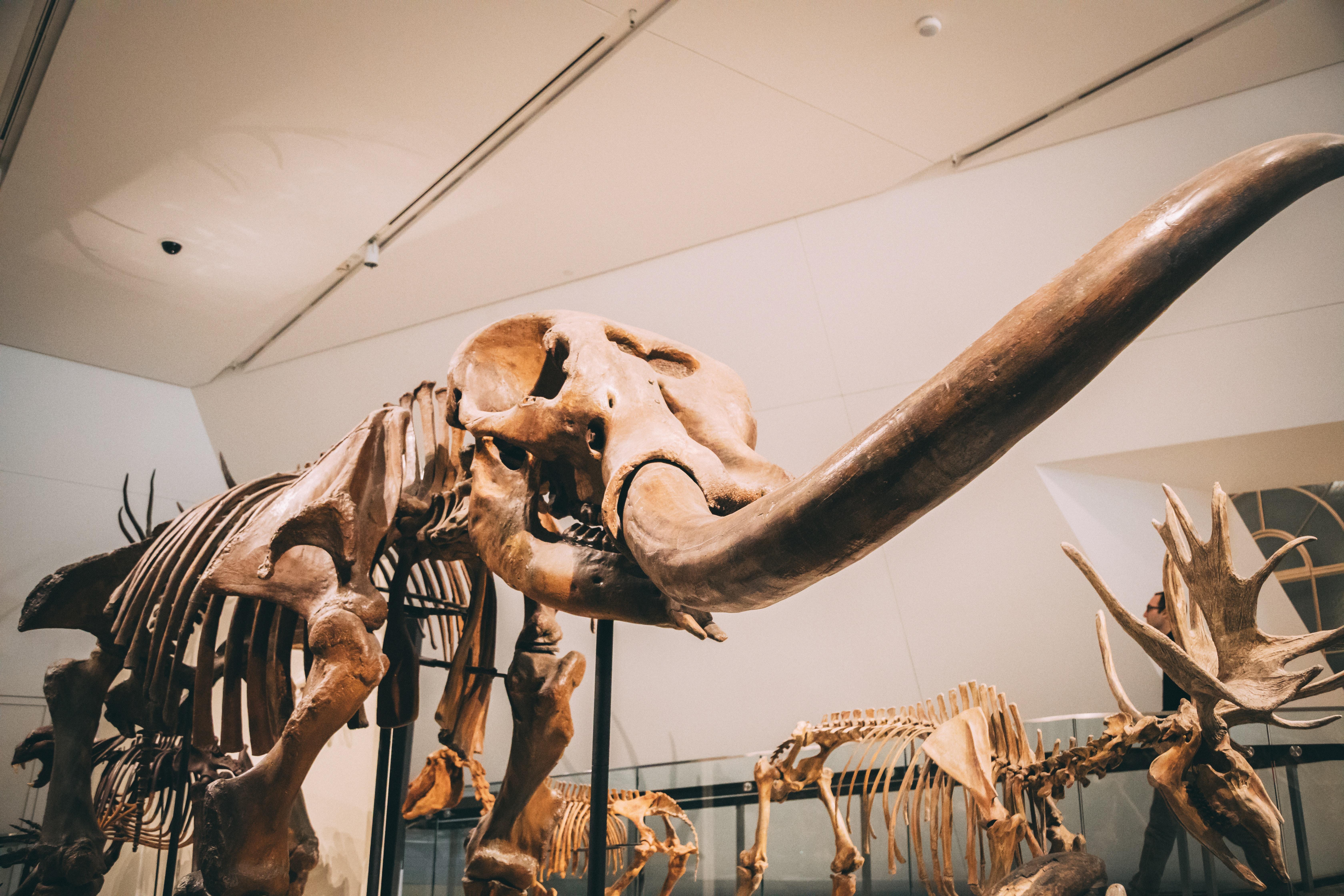 selective focus photography of animal skeleton