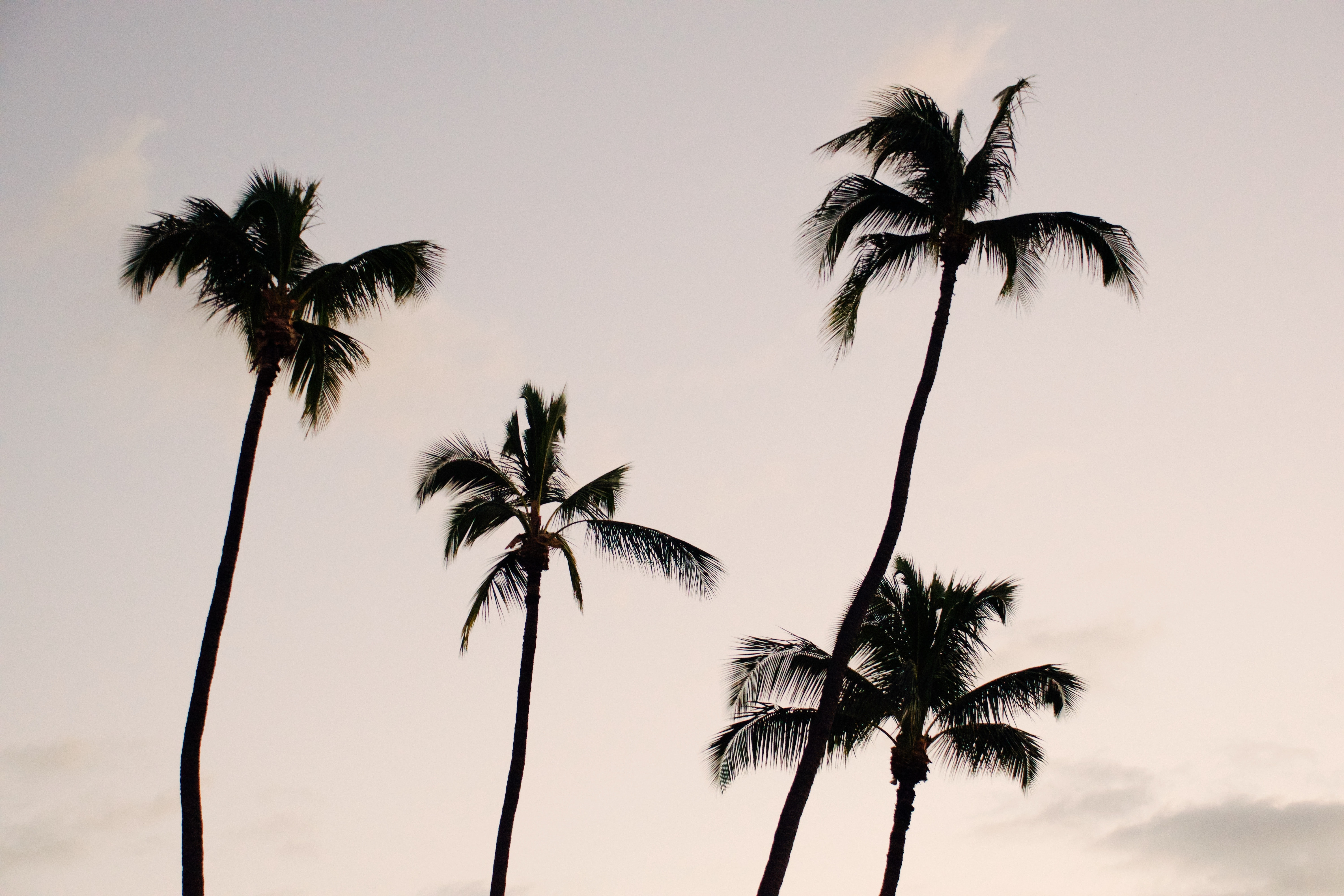 silhouette photography of four coconut palm trees