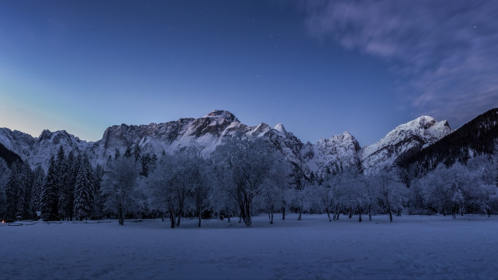 photo of trees covered with snow in front of snow capped mountain