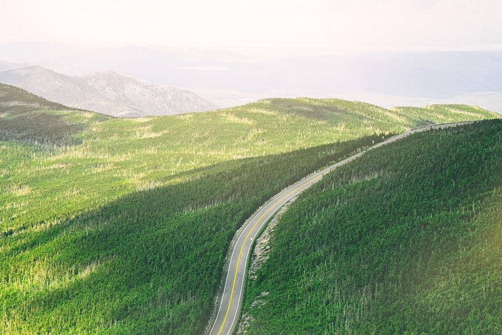 aerial photo of road between green trees