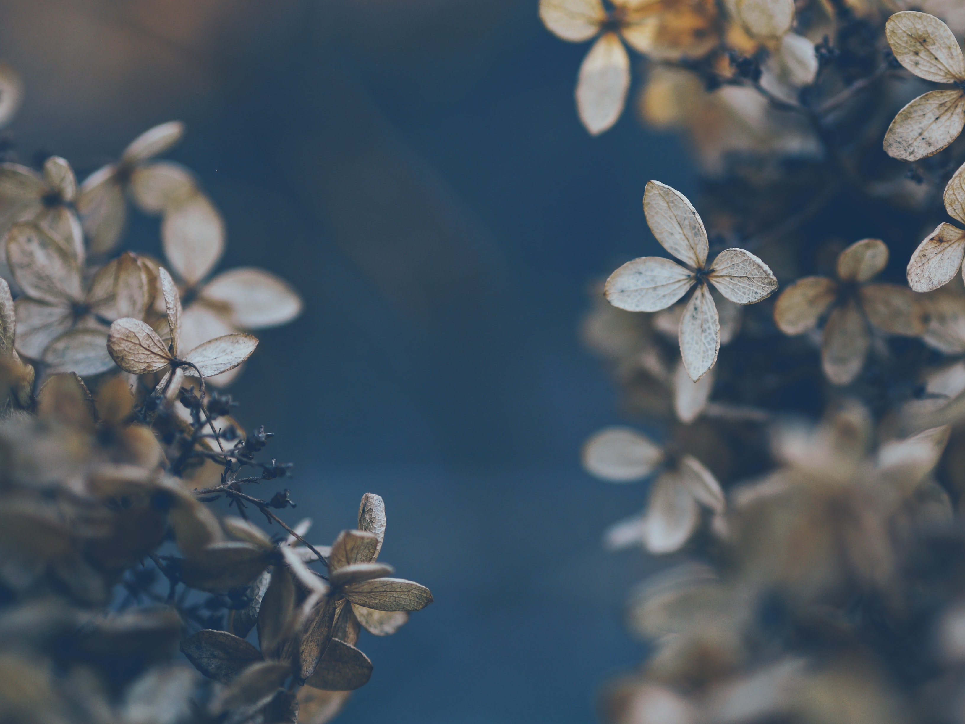 selective focus photography of gray petaled flowers