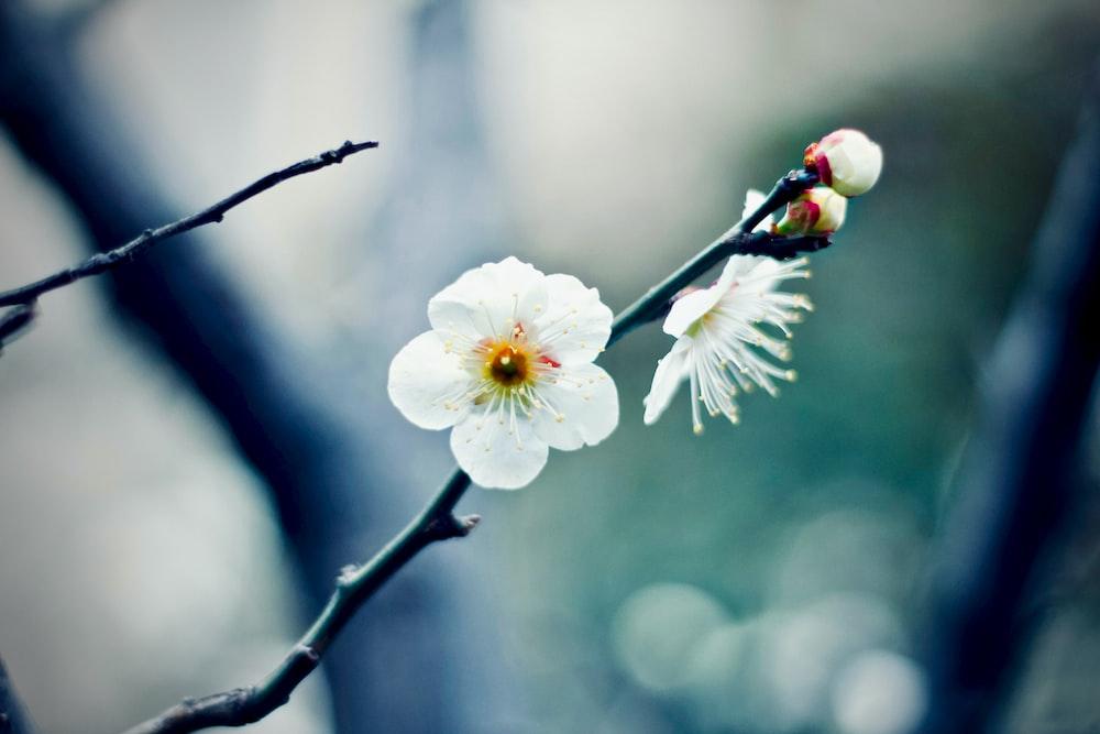white blossom flower closeup photography