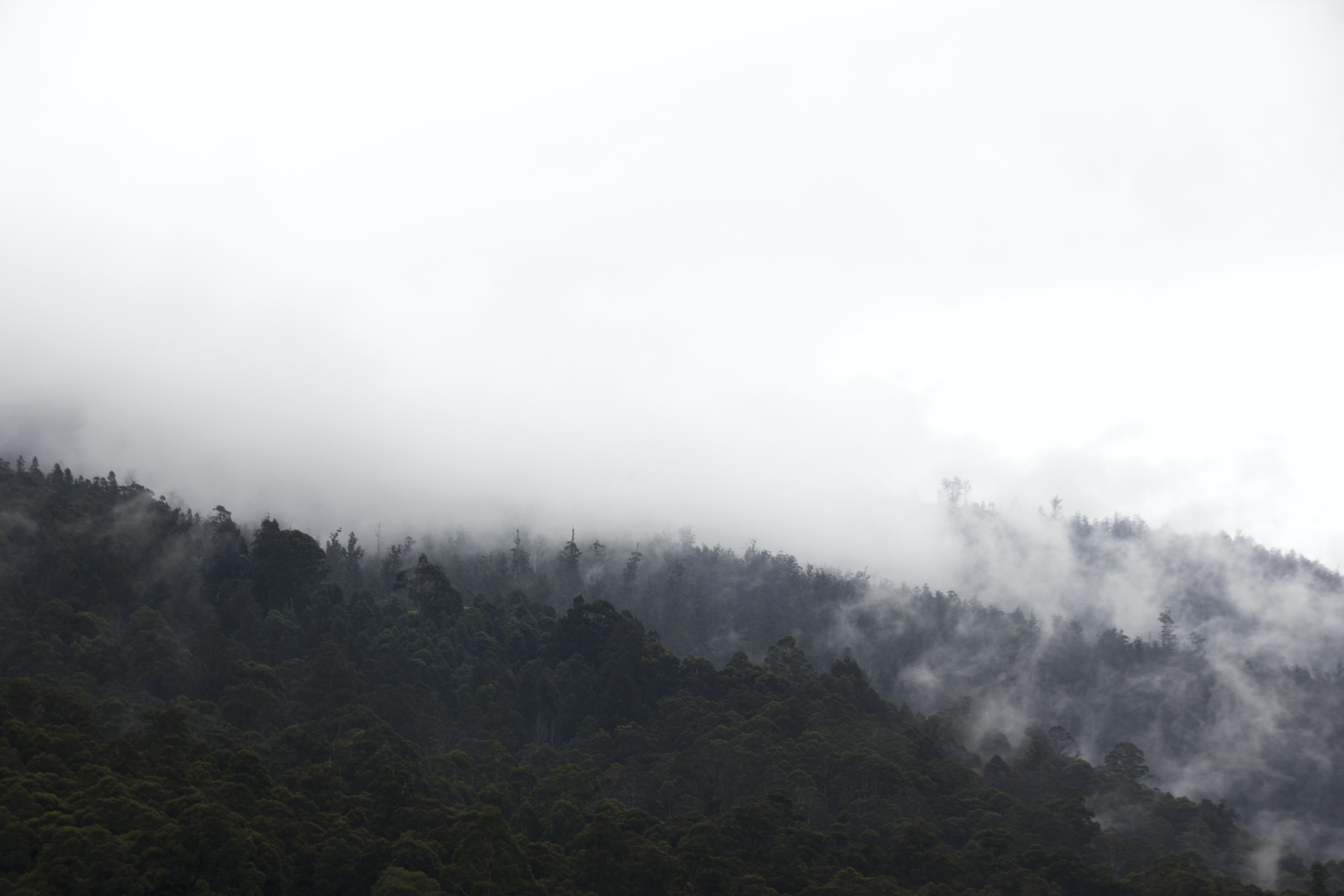 aerial photography of mountain with green leaves tree during misty day