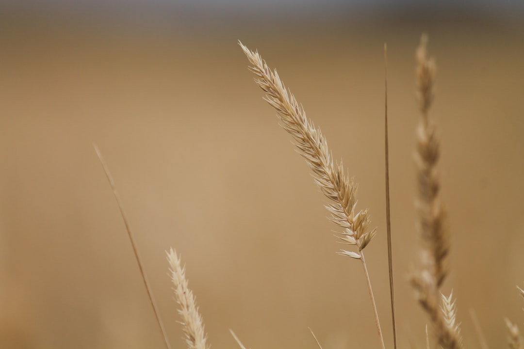 In the photography field, I love extreme depth of field, especially in fields.