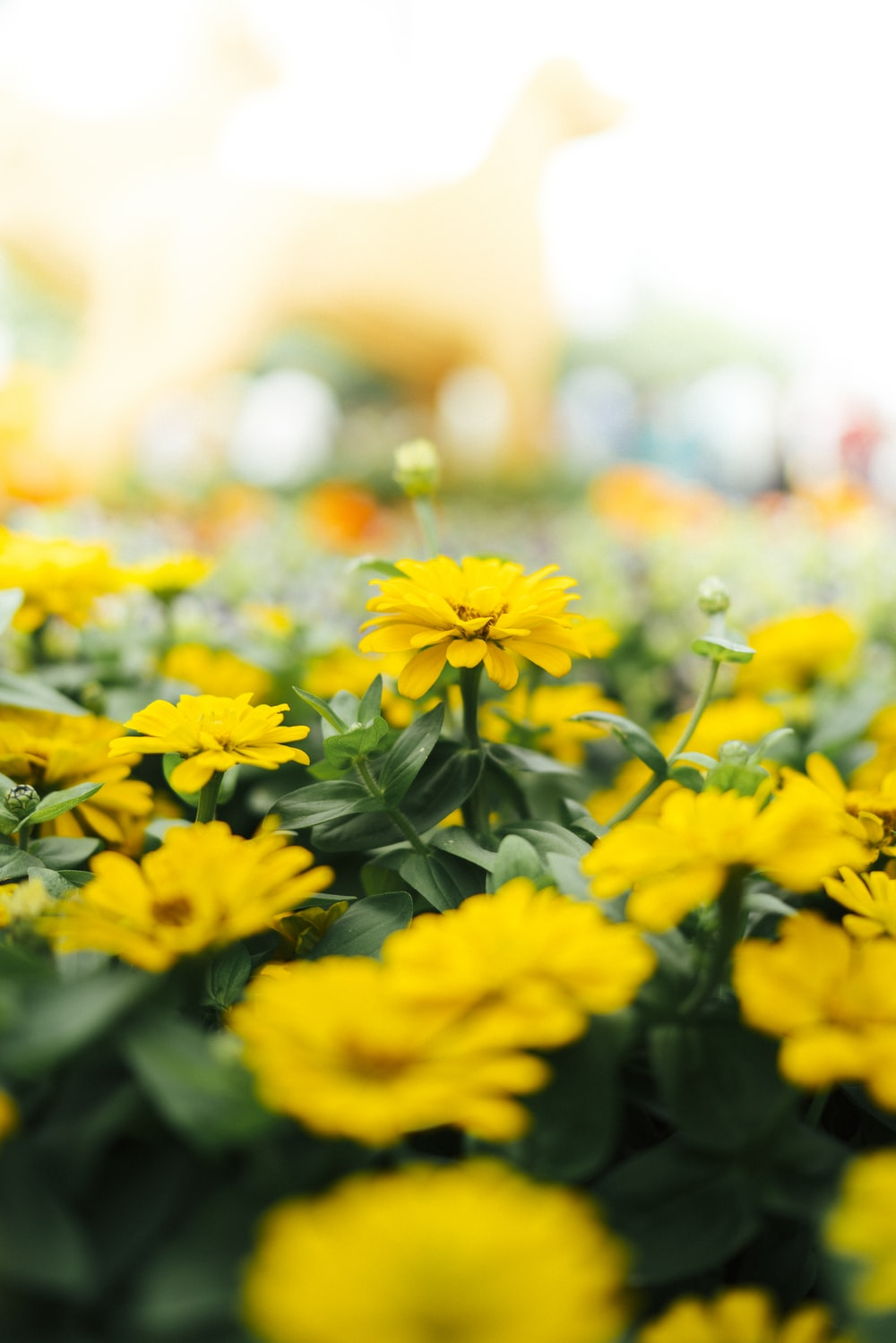 selective focus photography of yellow petaled flower field
