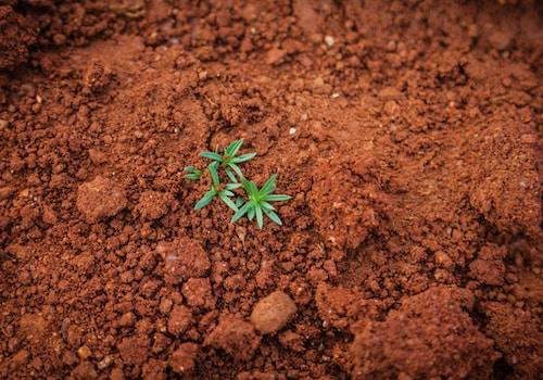 cannabis soil grow kits
