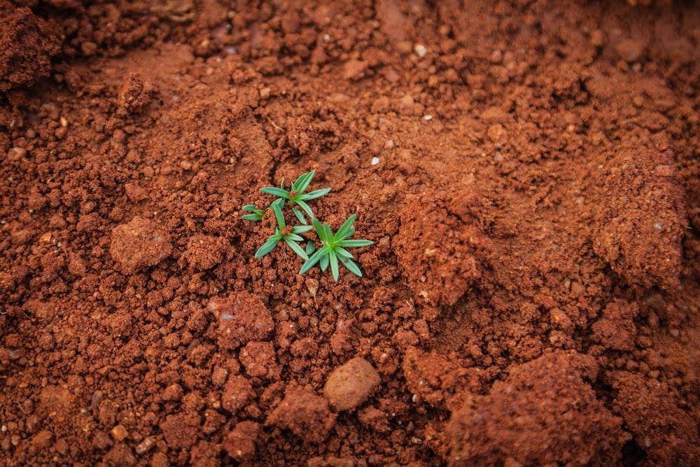 green plant on soil