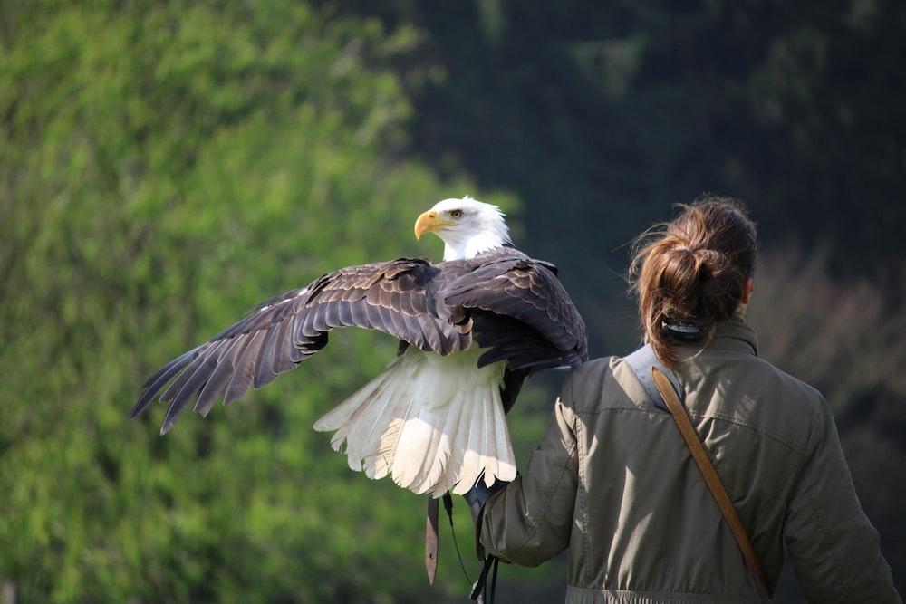 Bald Eagle Pictures | Download Free Images on Unsplash