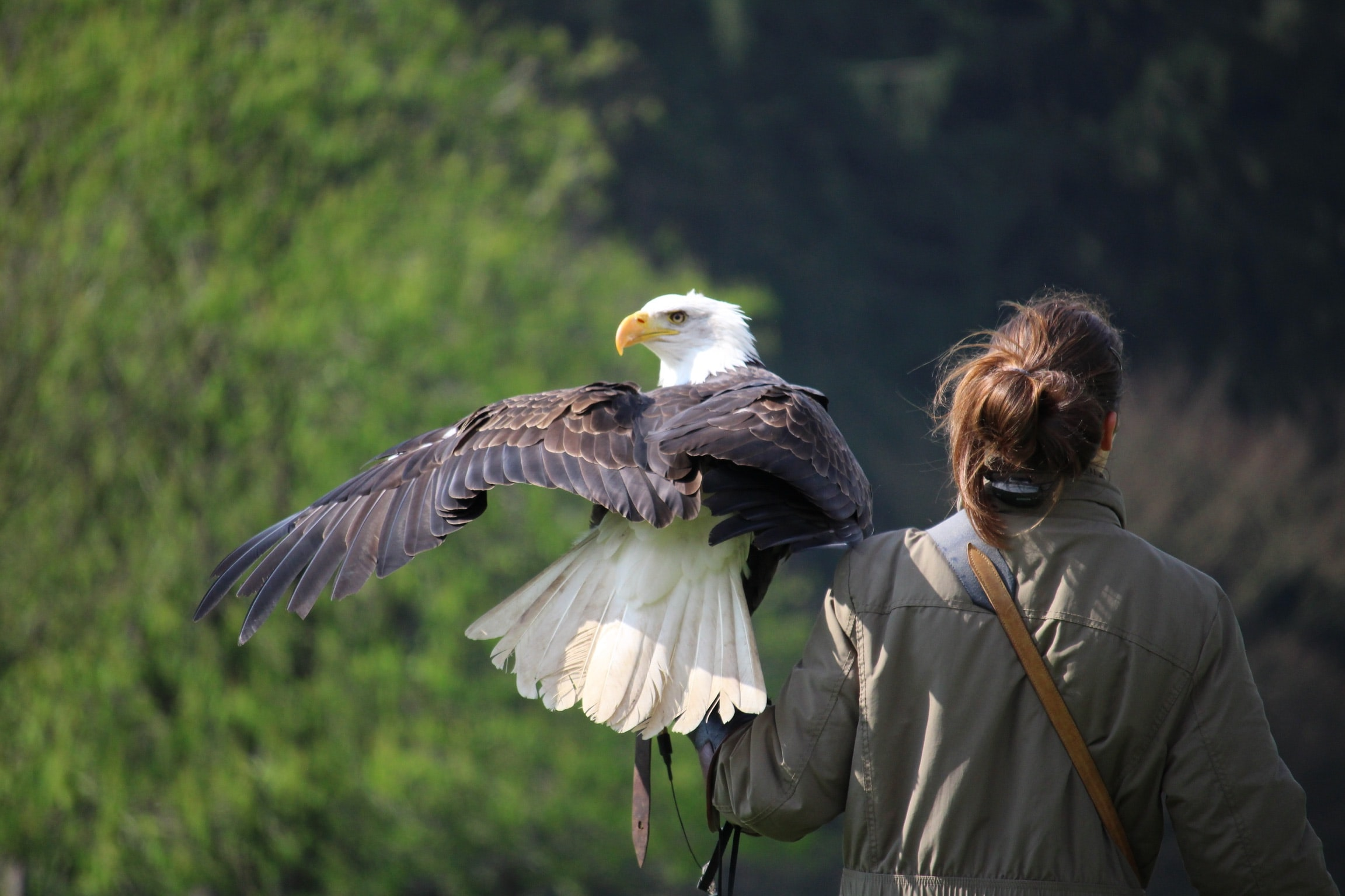 selective focus photography of white and brown eagle perch on woman left hand during daytime