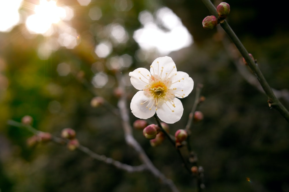 selective focus photography of white petaled flower plant