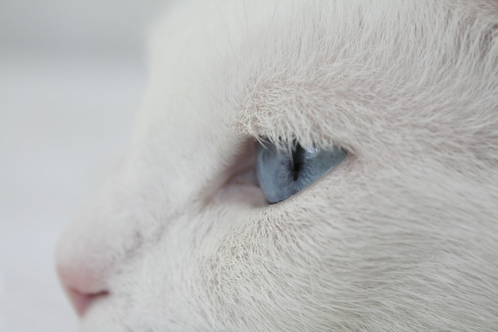 white cat in closeup photography