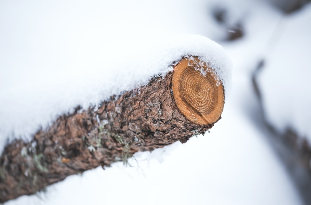 snow-covered tree trunk