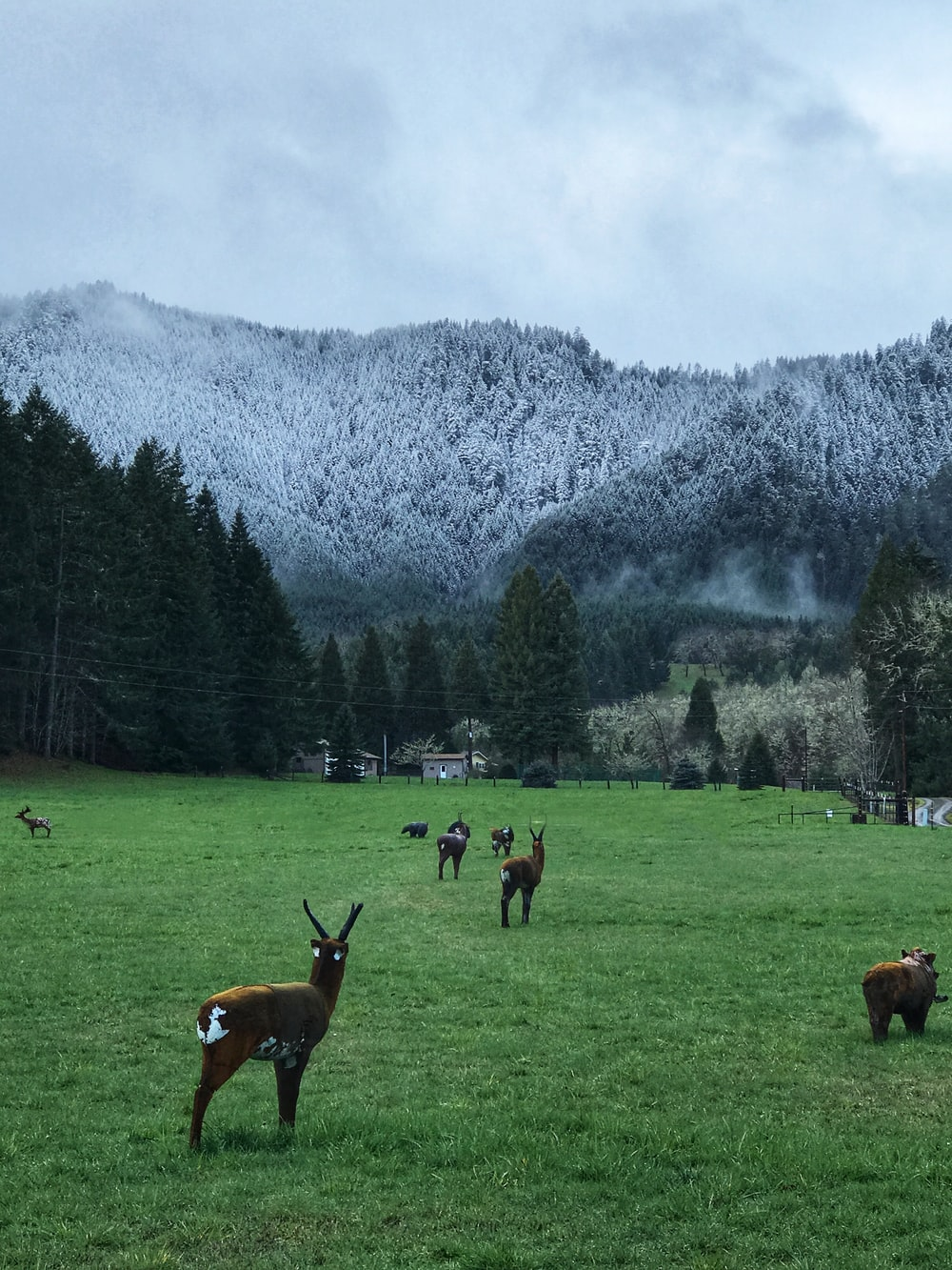 brown deer on grass field in front of tall trees