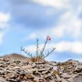 macro photo of red flower under blue sky