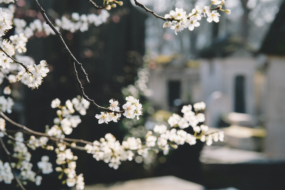 macro shot photography white flowers