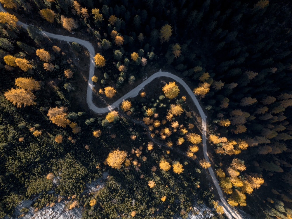 aerial photography of yellow trees