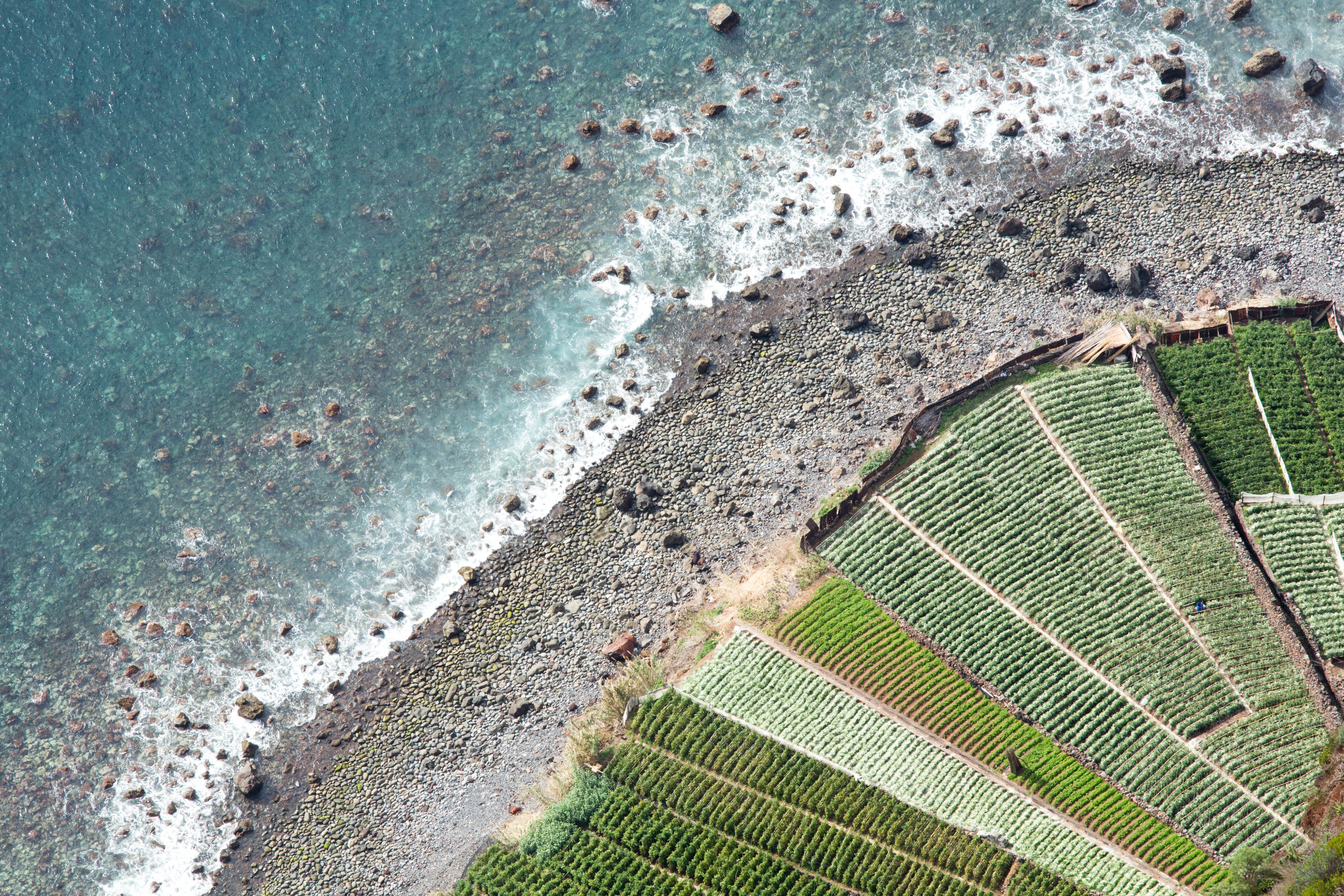 aerial photography of shoreline with farm