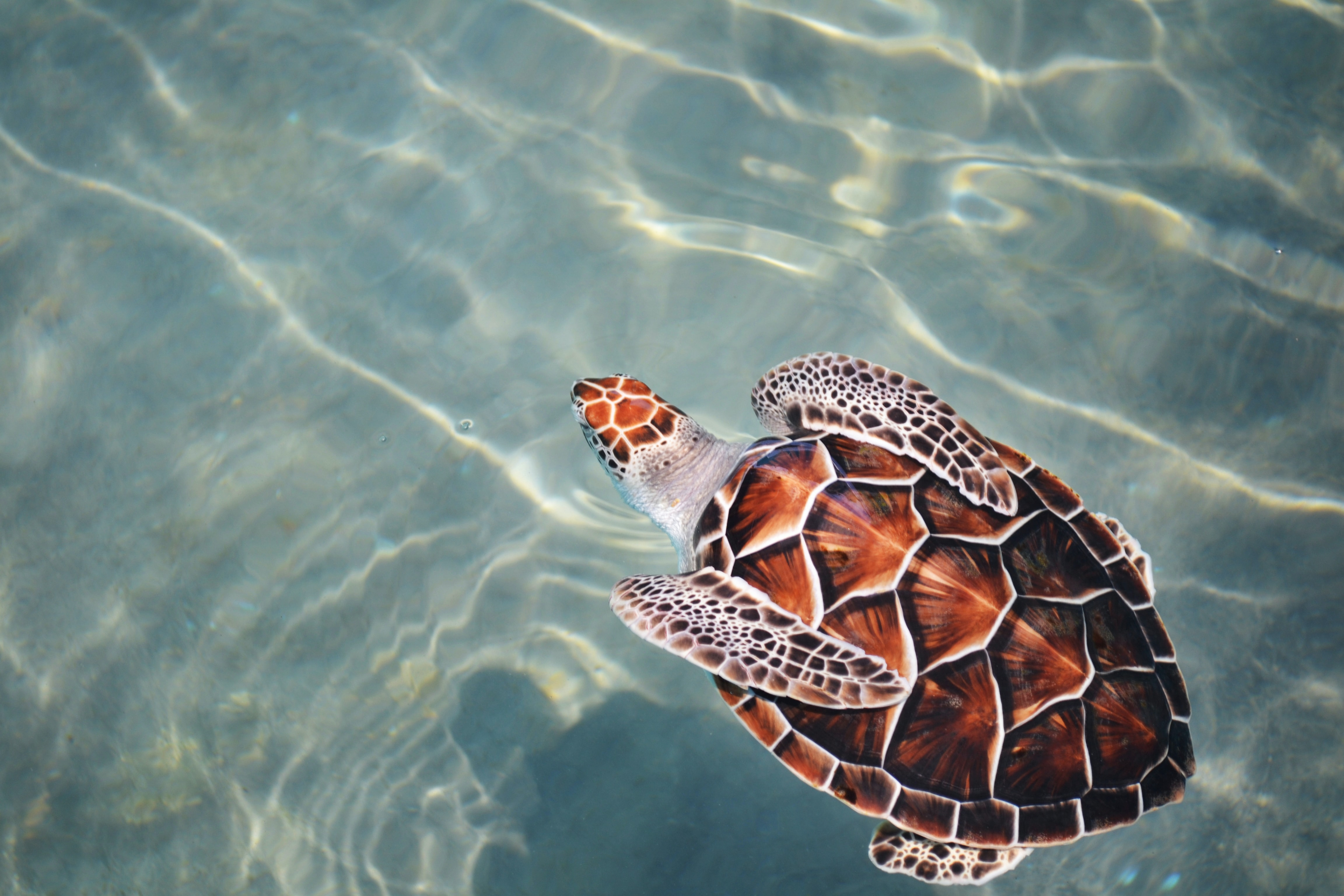 turtle swimming on body of water