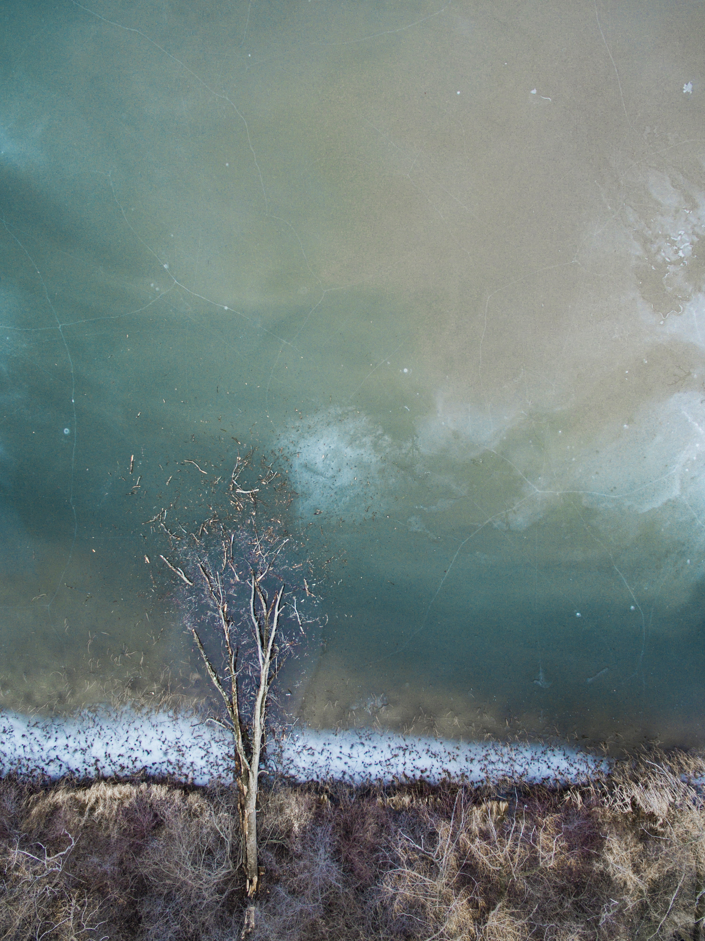 tree on body of water