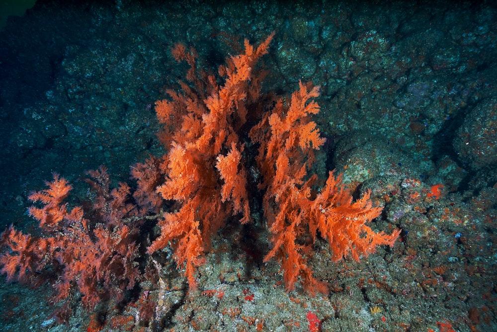 orange aquatic plant