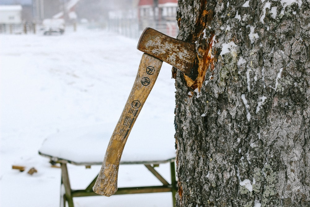 axe sticked on tree trunk