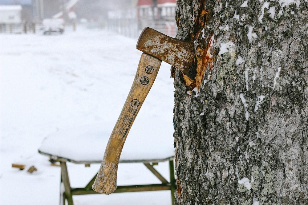 axe sticked on tree trunk