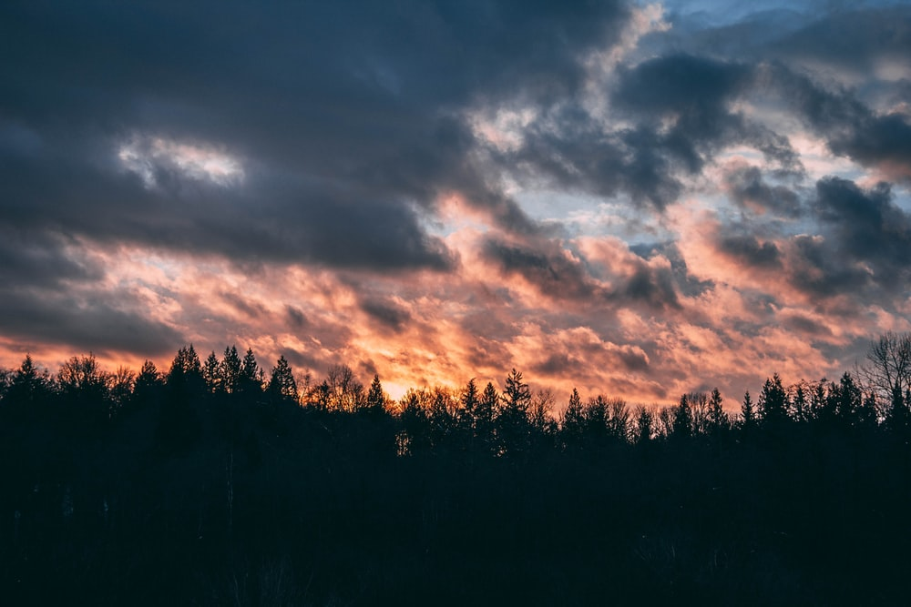 silhouette of trees under gray clouds during sunset
