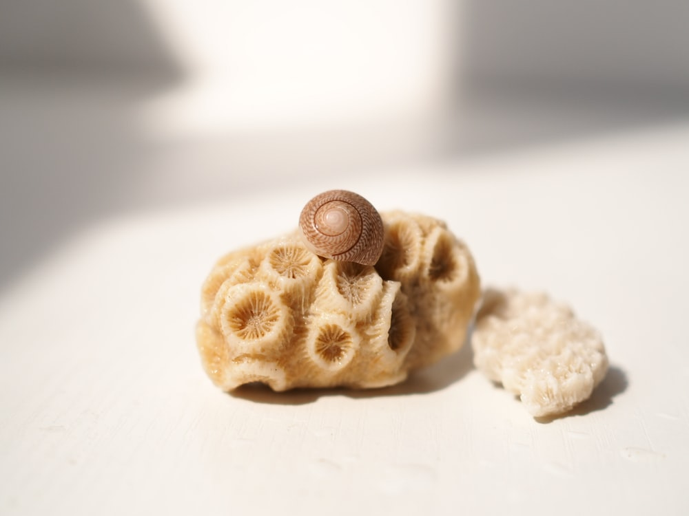 brown snail on seashell