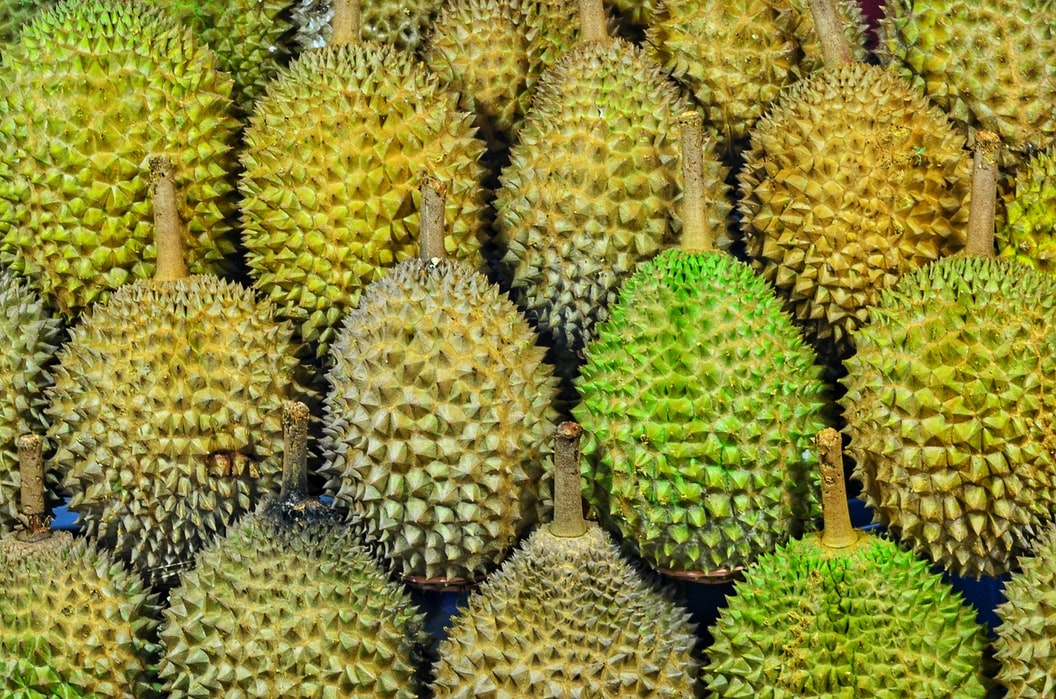 Durian Fruit Tree | Amazing Exotic Fruits You Didn't Know But Should